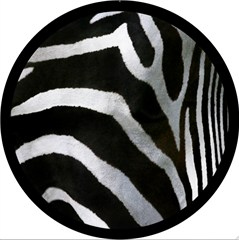 Zebra Design - 6 Inch Fog Light Covers (Pair)