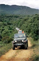 Jeep Poster/Print Jeeps on the Trail